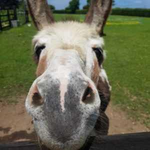 South East Donkeys