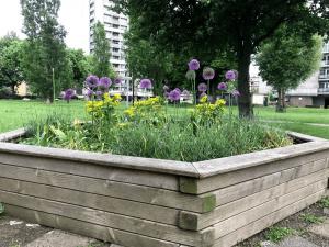 plants in beds brandon estate